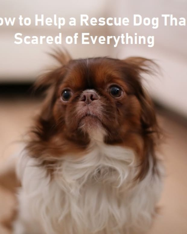 ways-to-get-a-scared-dog-to-trust-you