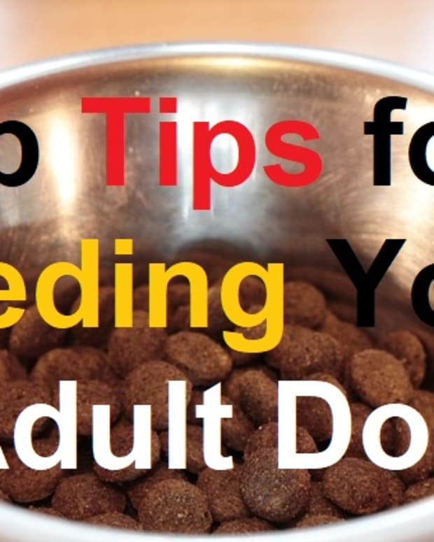 10 Things Not To Feed Your Dog