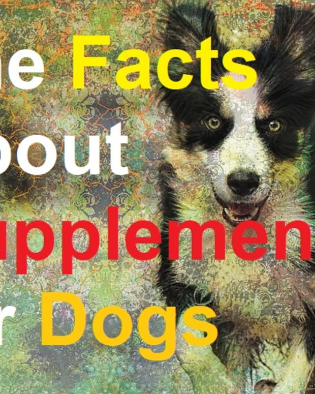 the-facts-about-vitamin-and-mineral-supplements-for-dogs