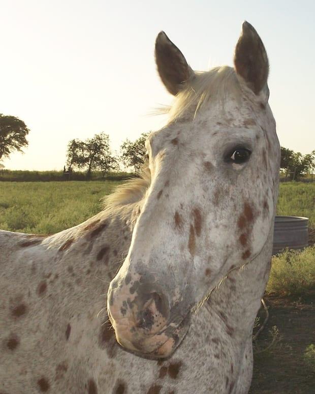how-i-train-a-horse