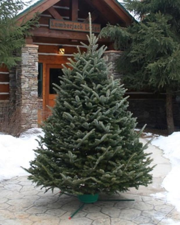 the-saddest-tree-at-christmas-time