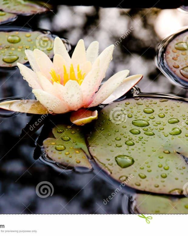 raindrops-from-heaven-saturdays-inspiration-14-a-soulful-dedication-to-rodric