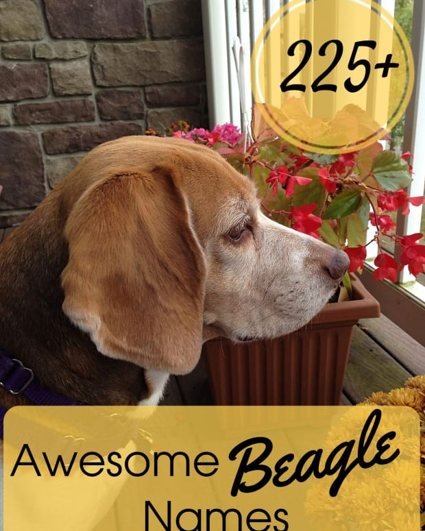 names-for-beagles
