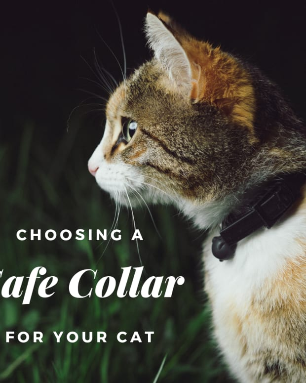 what-is-the-safest-cat-collar-for-cats
