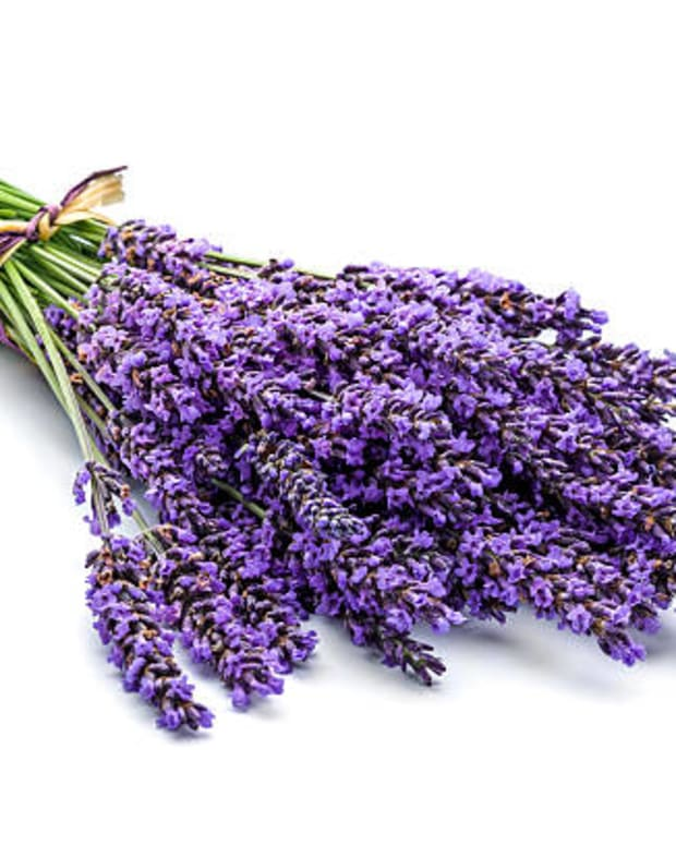 top-5-benefits-of-lavender