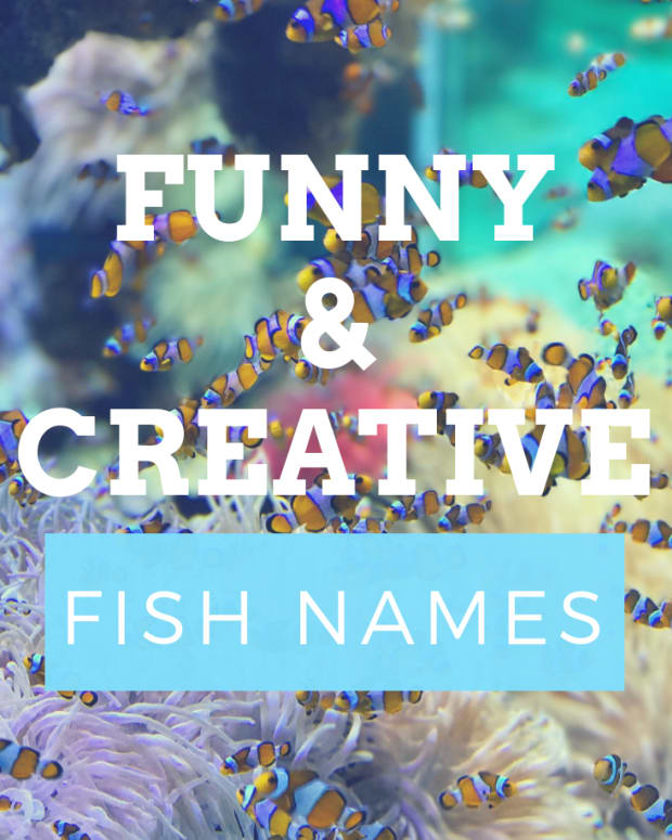 fish-names
