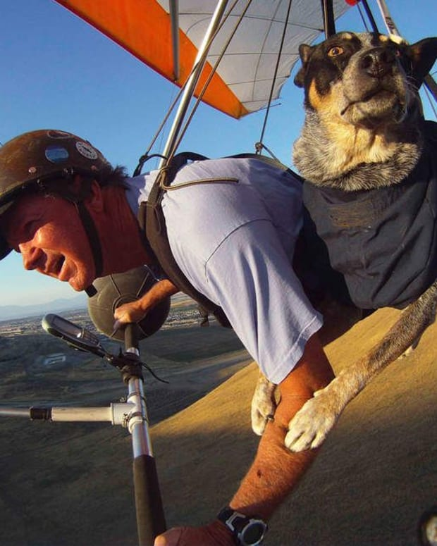 paragliding-with-a-dog-or-why-dogs-fly