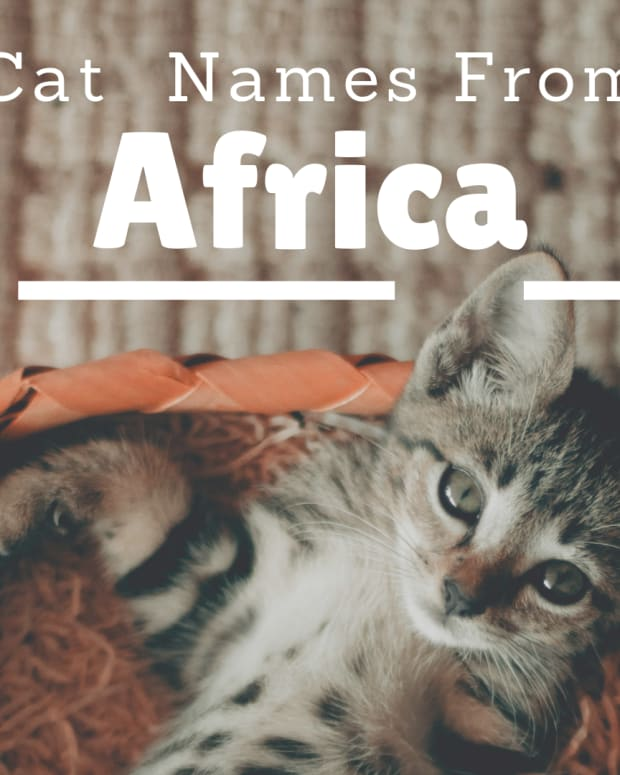 awesome-african-cat-names