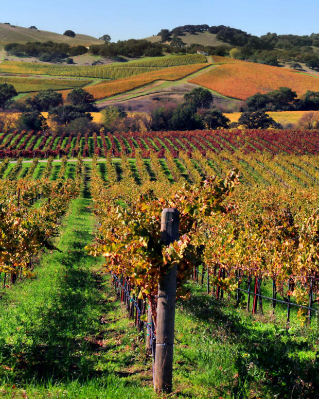 best-napa-valley-wineries-to-tour
