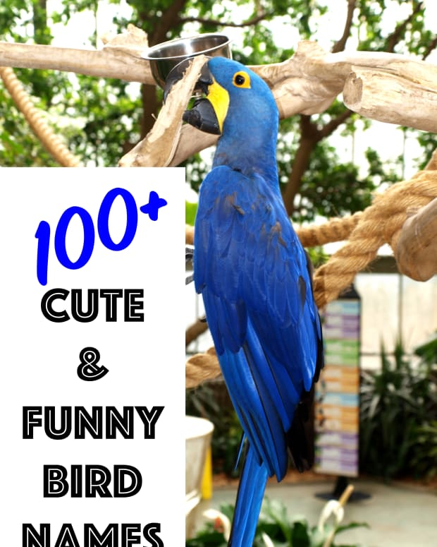 names-for-pet-birds
