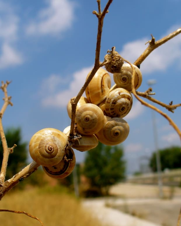 A group of snails on a tree branch.