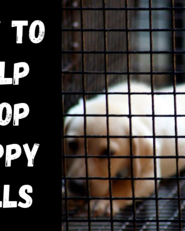 fight-against-puppy-mills