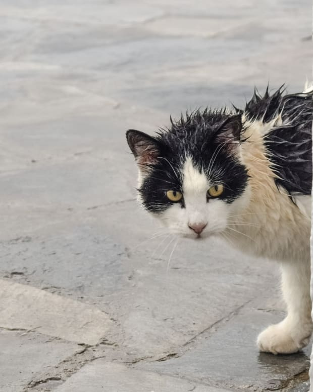 a-cat-in-the-rain-poem-for-cat-lovers