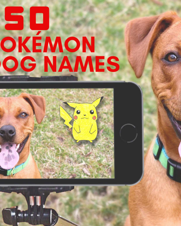 100-pokemon-dog-names
