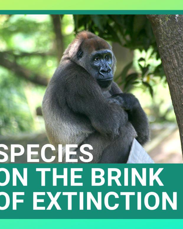 animals-that-are-going-extinct