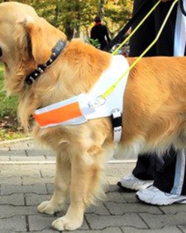 fantastic-service-dogs