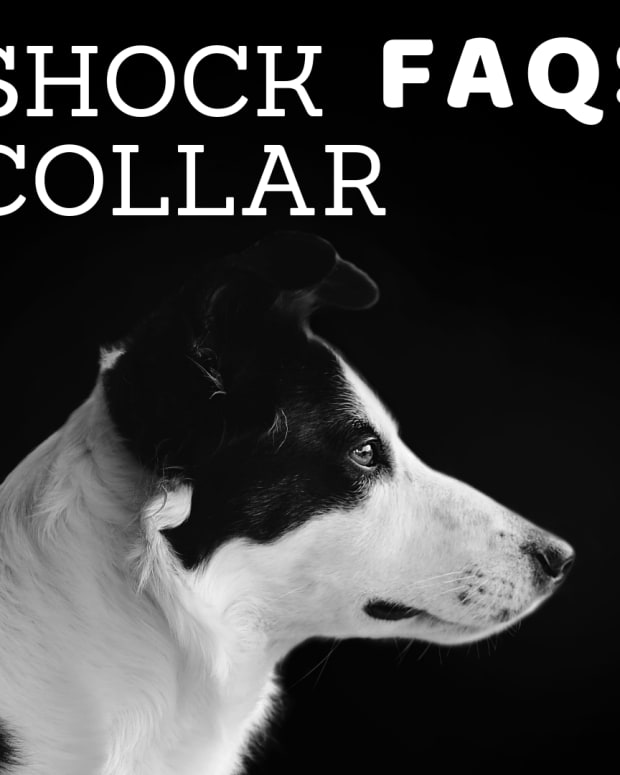 are-dog-shock-collars-harmful-the-dangers-of-e-collar-training