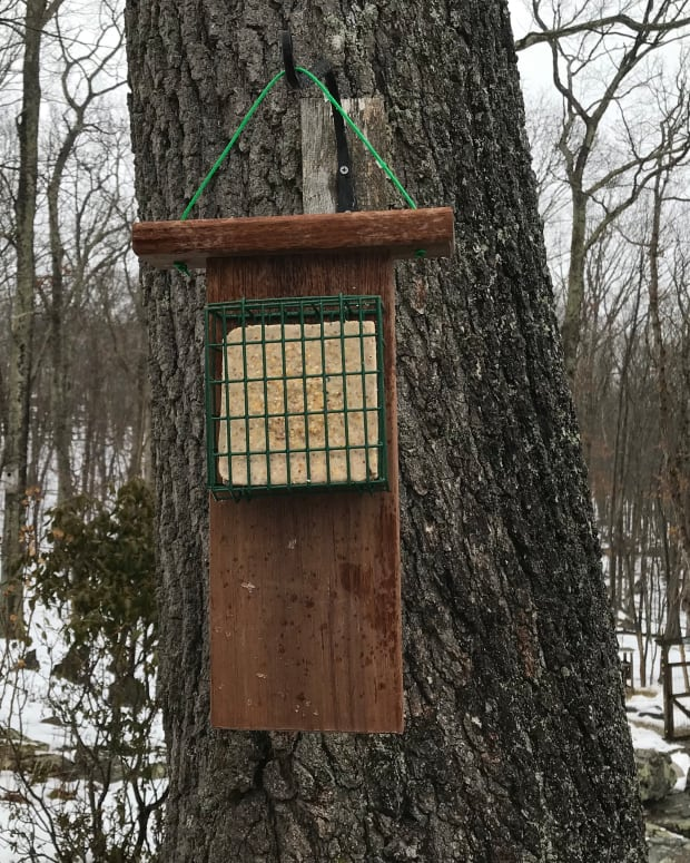 how-to-make-a-suet-cake-bird-feeder-with-a-tail-prop-for-woodpeckers