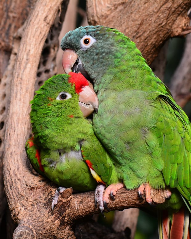 100-best-names-for-lovebirds