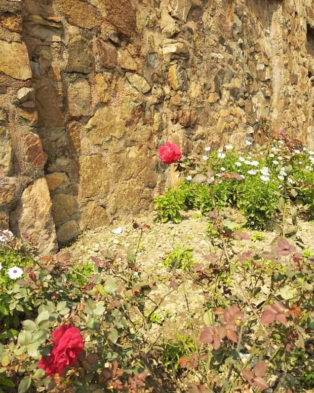 petals-of-life
