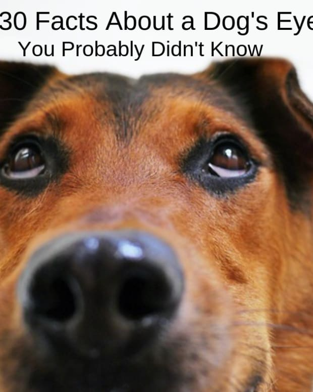 30-facts-about-dog-eyes-you-probably-didnt-know-until-now