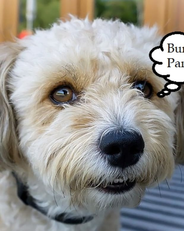 what-causes-burping-in-dogs