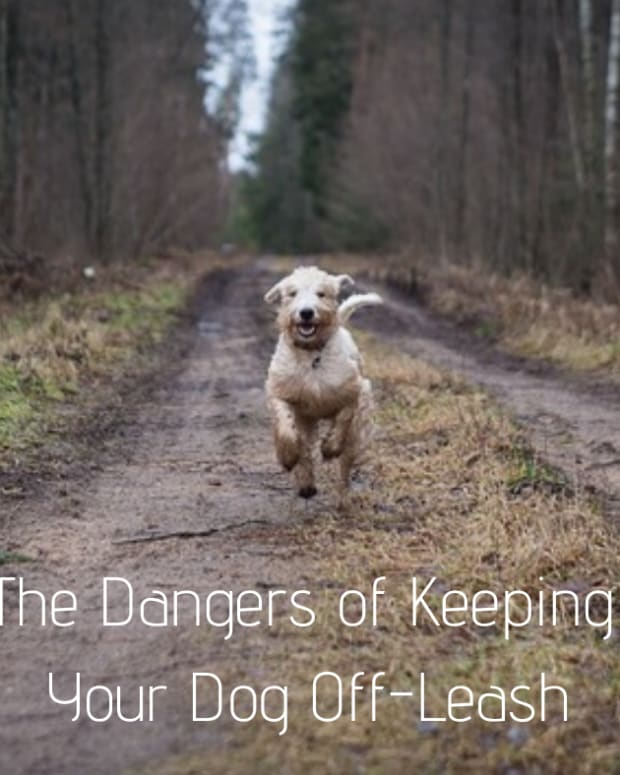 dangers-of-keeping-dogs-off-leash