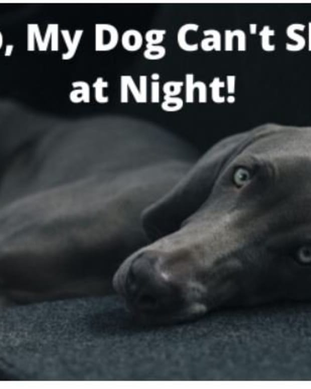 how-to-make-a-dog-sleep-at-night