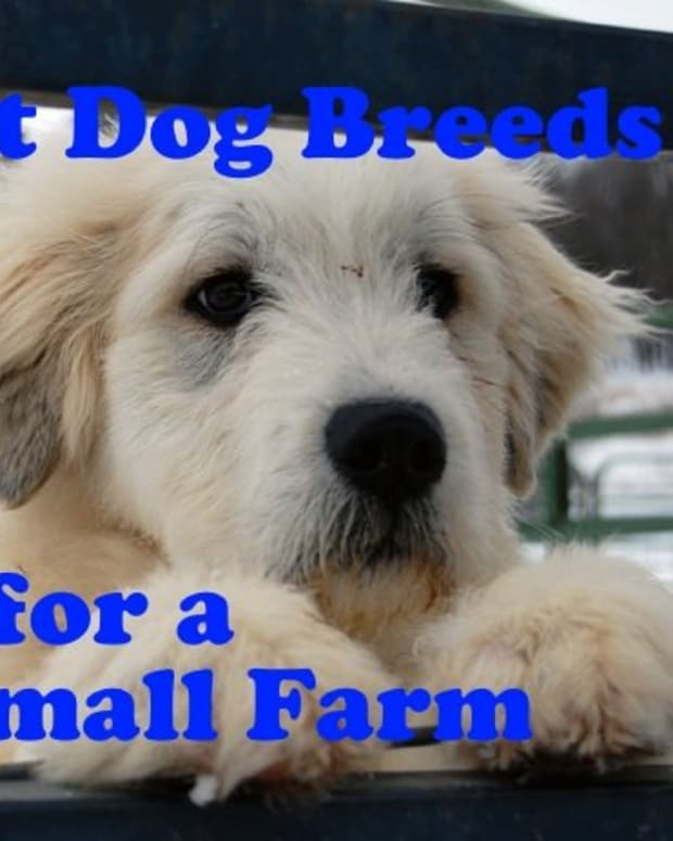 best-farm-dog-breeds