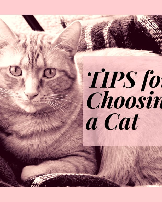 tips-for-choosing-a-cat