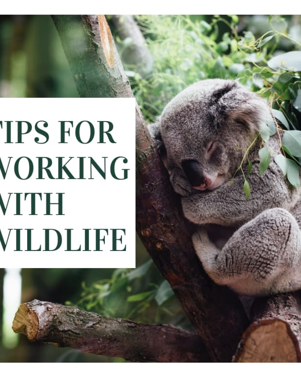 how-to-become-a-wildlife-rehabilitation-what-career-steps-to-take