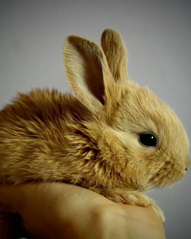 is-a-rabbit-the-best-pet-for-you