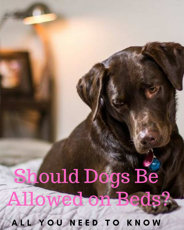 should-dogs-be-allowed-on-the-bed
