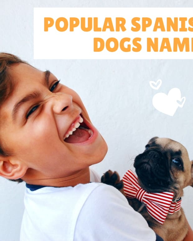 popular-spanish-dog-names-and-their-meanings