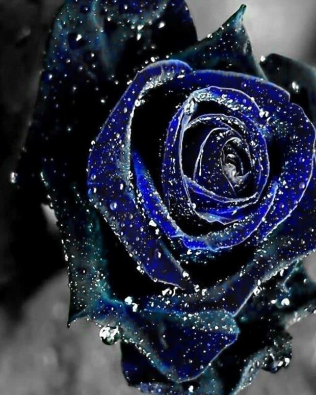 bitter-blue-heart
