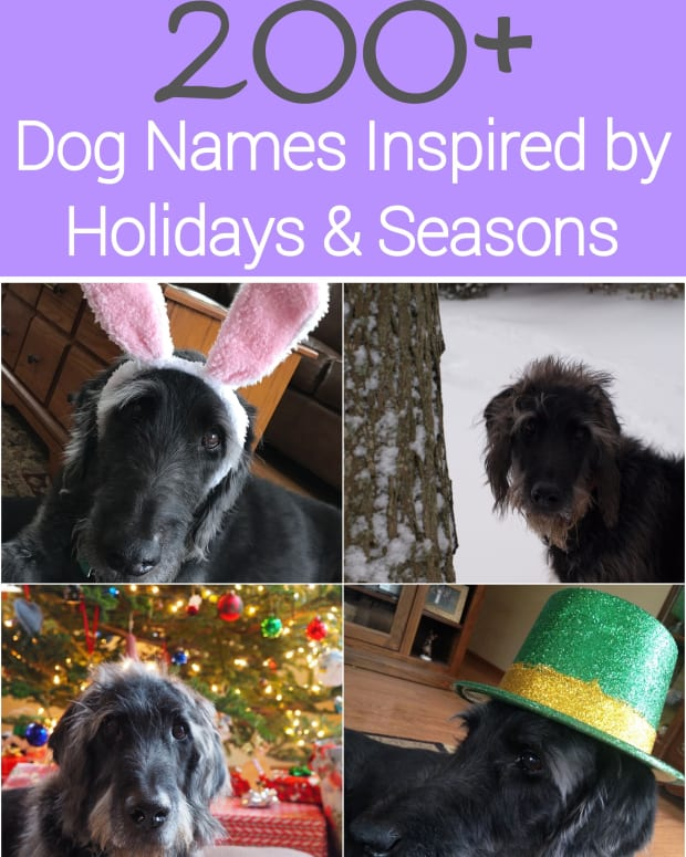 holiday-inspired-dog-names