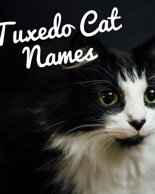 200-best-names-for-tuxedo-cats
