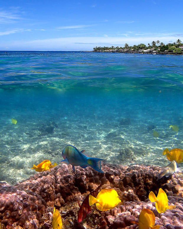 hawaii-snorkeling-at-kahaluu-beach-park-big-island