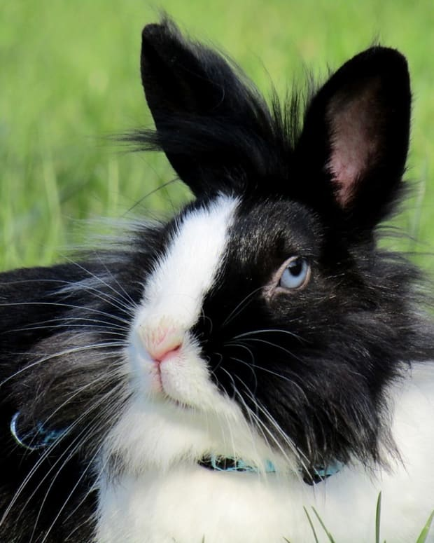 how-to-groom-your-rabbit-a-complete-guide