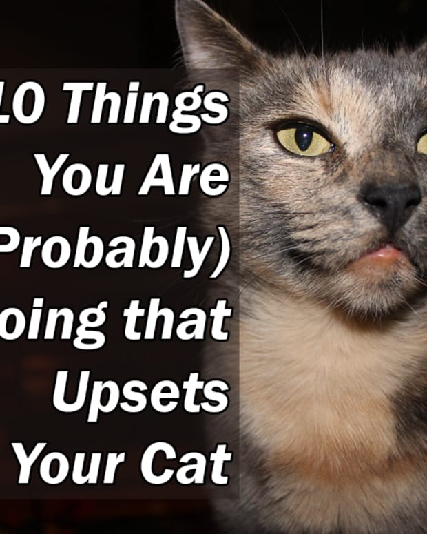 10-things-you-are-probably-doing-that-upsets-your-cat