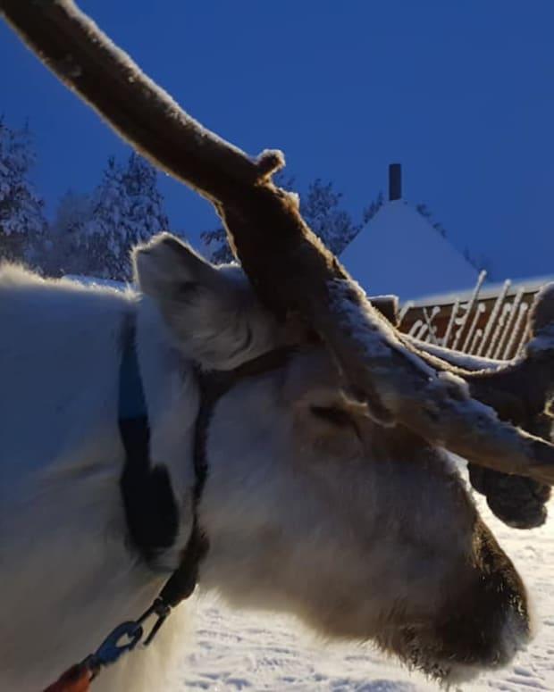 lapland-adventures-jaakkola-reindeer-farm