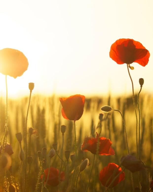 a-modern-war-poem