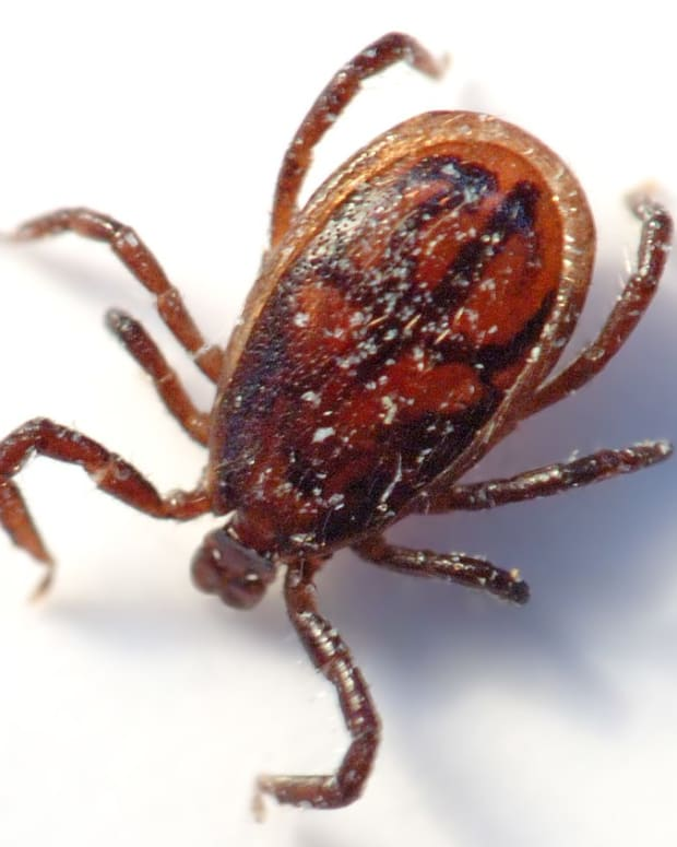 i-can-make-ticks-a-household-word