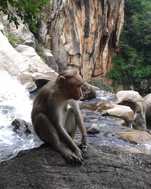best-places-to-visit-in-courtallam
