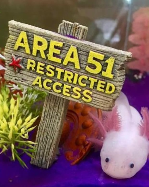 5-food-options-for-axolotls