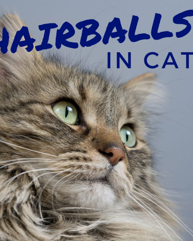cat-hairballs-causes-remedies-and-how-to-prevent-them