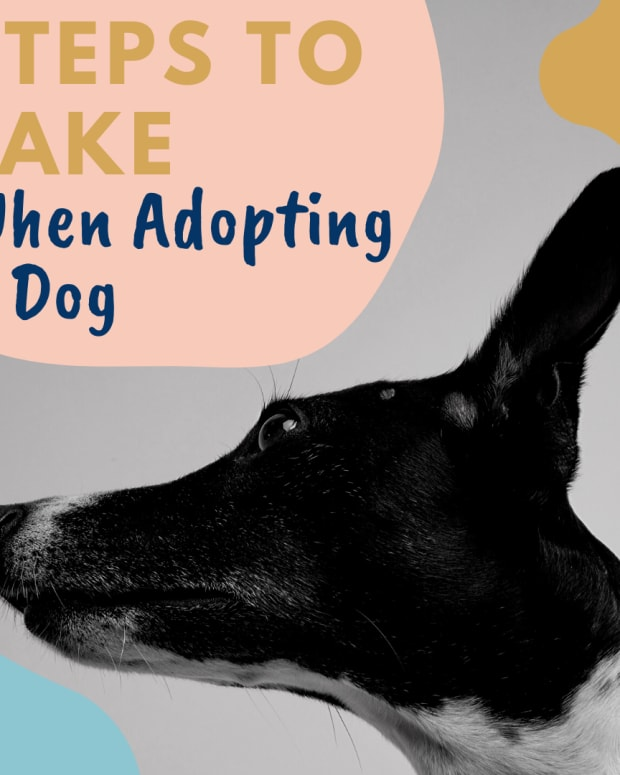 8-steps-to-prepare-you-for-your-new-rescue-dog