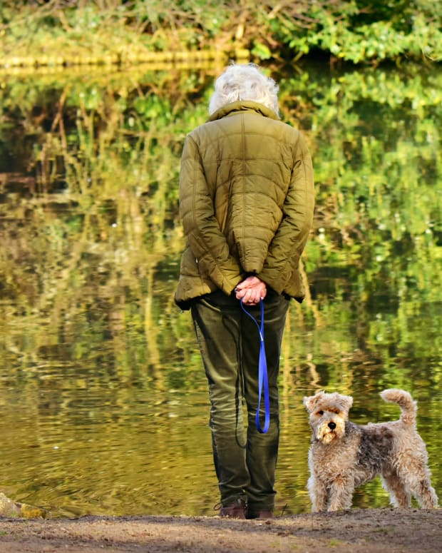 estate-planning-for-seniors-pets