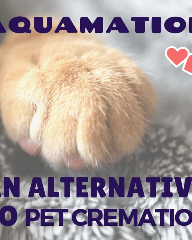 aquamation-alternatives-to-pet-burial-and-cremation