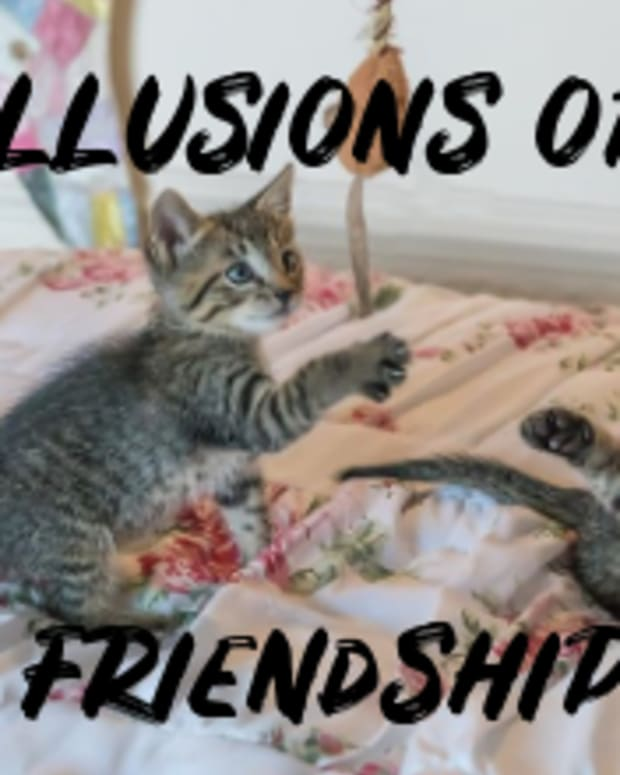 poem-illusion-of-friendship